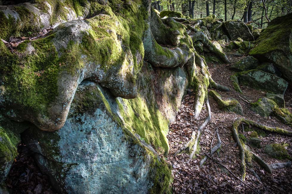 Roots over Rocks, Padley Gorge